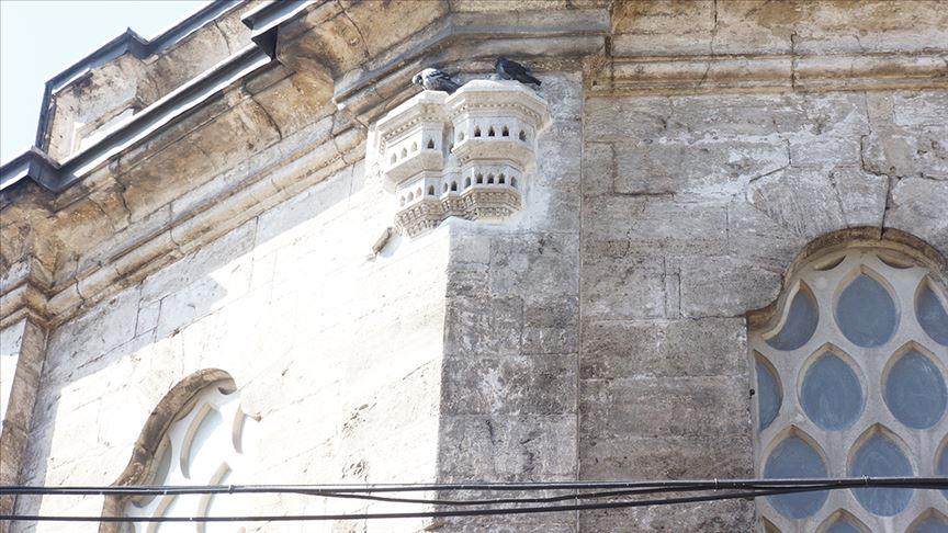 """""""قصور الطيور"""".. ثقافة عثمانية متوارثة رفقا بالحيوان"""
